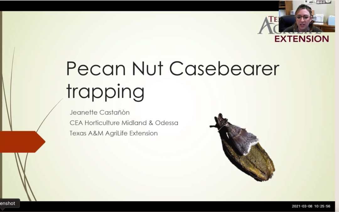 Pecan Nut Casebearer Trapping