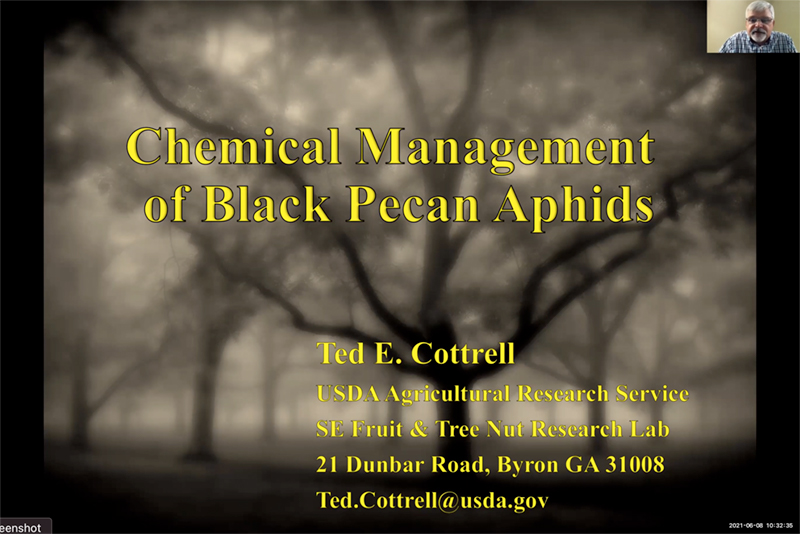 Chemical Management of Black Pecan Aphids