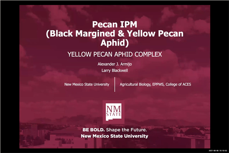 Pecan IPM (Black Margined and Yellow Pecans Aphids)