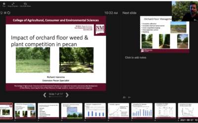 Impact of Orchard Floor Weed and Plant Competition in Pecan